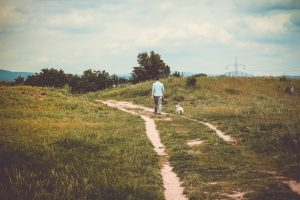 Best tips for walking older and elderly dogs