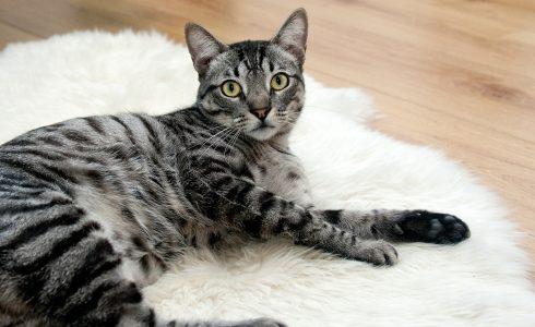 Professional Cat Behaviour Training Horsham