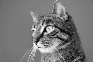 Cat Stressed At Home Black And White
