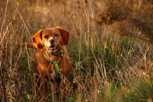 Dog Walking In The Countryside - The Friendly Pet Nurse