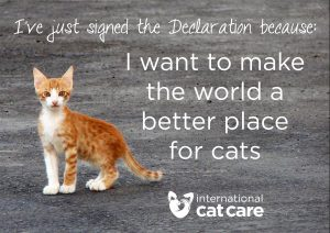 International Cat Care - International Declaration of Responsibilities to Cats - The Friendly Pet Nurse