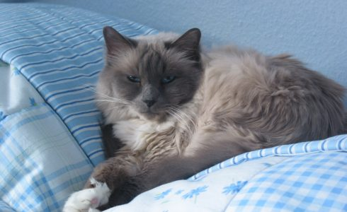 Cat Sitter Horsham - warnham - villages - West Sussex