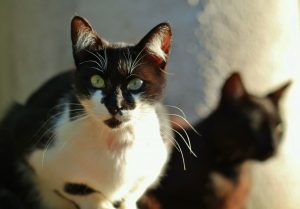 Two Cats Together - Importance Of Neutering
