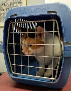 cat carrier - travelling by car with your cat